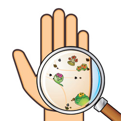 bacteria on hand