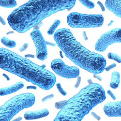 E coli bacteria - Drinking Water Contaminants, Facts/Removal ...