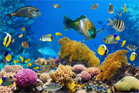 Reverse Osmosis Amp Deionized Filters For Aquariums Apec Water