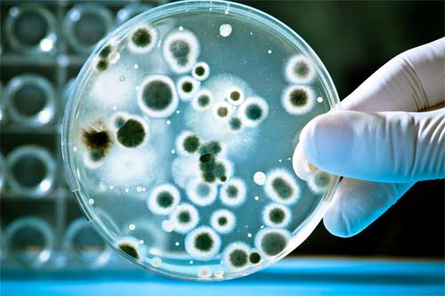How do water contaminants related to health effects | APEC Water