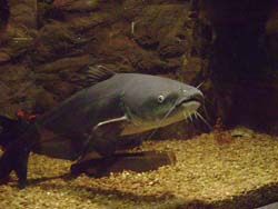 What food should you feed minnows, and what are some other ...
